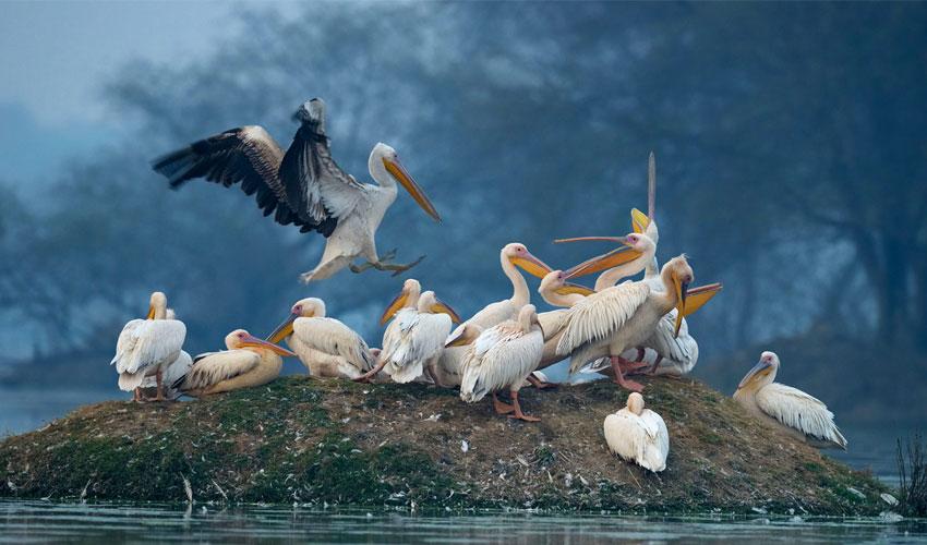 bird-sanctuary-day-tour-bharatpur.jpg