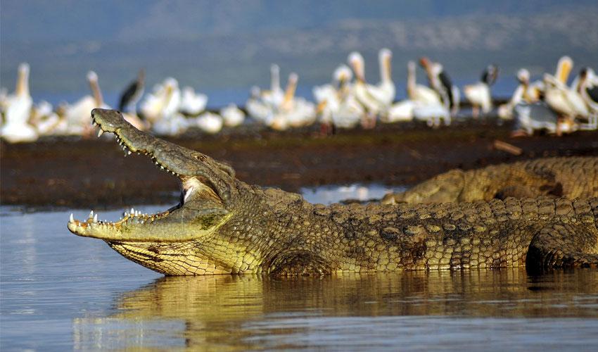 crocodile-dundee.jpg